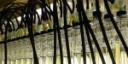 Biocarburanti: lo sprint delle microalghe