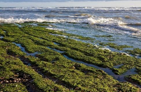 Le alghe, alleato prezioso per l'ecosostenibilità