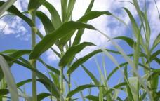 Bioetanolo, si lavora alla seconda generazione