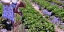 L'export traina l'agricoltura biodinamica