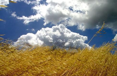 Agroalimentare e agroenergie: nuova certificazione