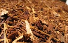 Biomasse: regolamentazione e prospettive future