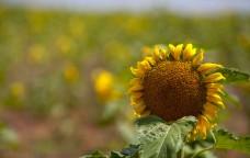 Biocarburanti, il futuro è nelle nuove generazioni