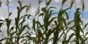 Cibo e bioenergie, un connubio possibile