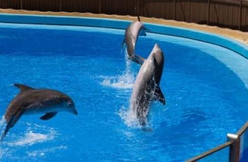Stop alla cattura e al commercio dei cetacei