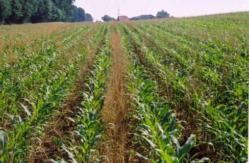 Eu, definitive le norme sulla coltivazione di Ogm
