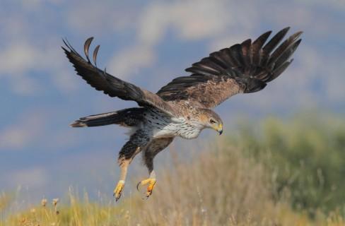 Un mondo di biodiversità da scoprire e tutelare: gli uccelli che vivono in Italia