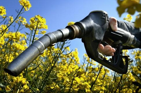 Biocarburanti per la transizione
