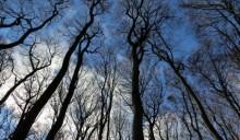 Foreste e clima: non è così semplice