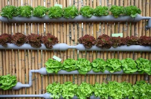 Vertical Farming, la grande novità di AquaFarm