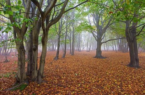 """Aquafarm: """"più fattorie verticali per conservare più boschi orizzontali"""""""
