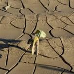 agricoltura clima siccità