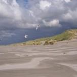 Terschelling_Dunes (1)