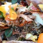 compost raccolta della frazione organica