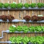 fattorie verticali
